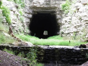 old-tunnel-wildlife-management